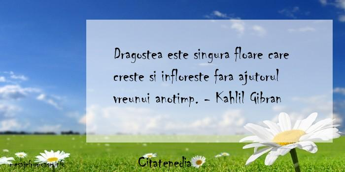 Citatepedia - Dragostea este singura floare care creste si infloreste fara ajutorul vreunui anotimp. - Kahlil Gibran