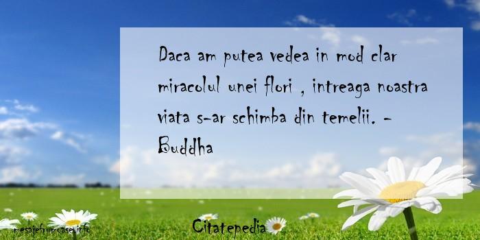 Citatepedia - Daca am putea vedea in mod clar miracolul unei flori , intreaga noastra viata s-ar schimba din temelii. - Buddha