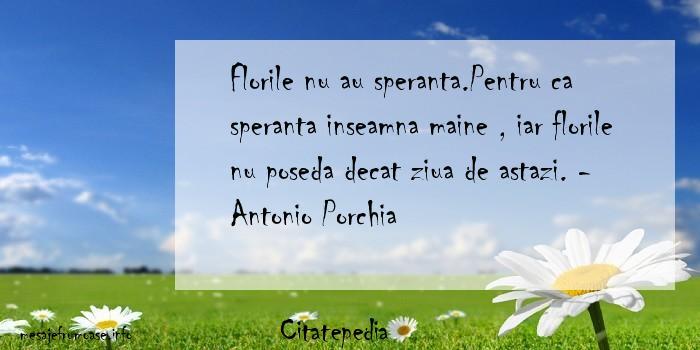 Citatepedia - Florile nu au speranta.Pentru ca speranta inseamna maine , iar florile nu poseda decat ziua de astazi. - Antonio Porchia