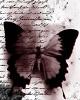Mesajefrumoase.info - Virginia Woolf - Mesaje Frumoase Literatura