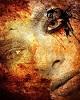 Mesajefrumoase.info - Blaise Pascal - Mesaje Frumoase Melancolie