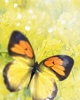 Mesajefrumoase.info - Aldous Huxley - Mesaje Frumoase Natura